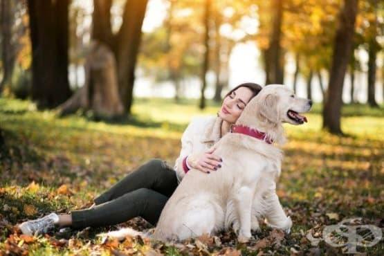 Изследователи доказаха: хората предпочитат компанията на своите кучета - изображение