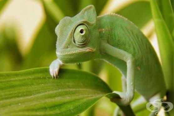 5 мита за животни, на които не бива да вярвате - изображение
