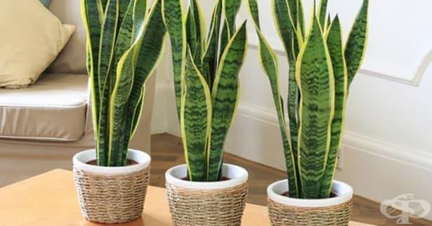 Против безсъние: 5 стайни растения, които да поставите в спалнята си - изображение