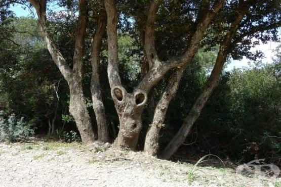 Дървета с причудливи човешки форми - изображение