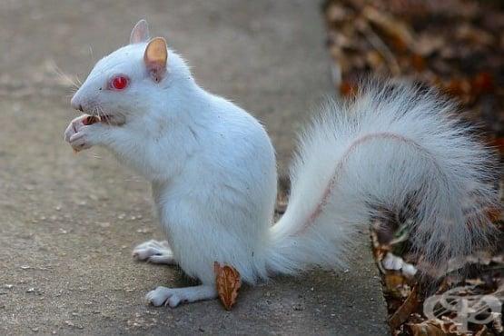 Животни албиноси: когато природата изчерпа запасите си от боички  - изображение