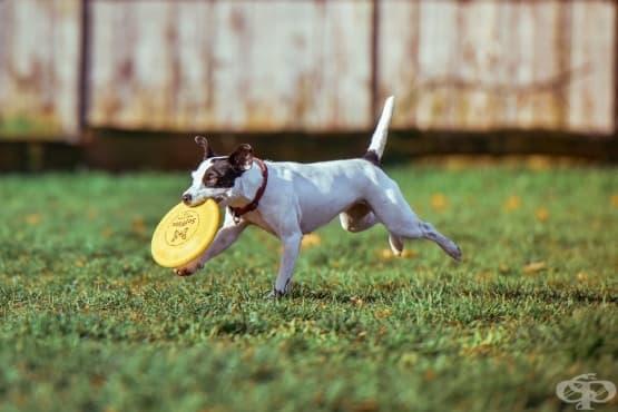 Как да дресирате кучето си да се държи възпитано пред приятелите ви - изображение