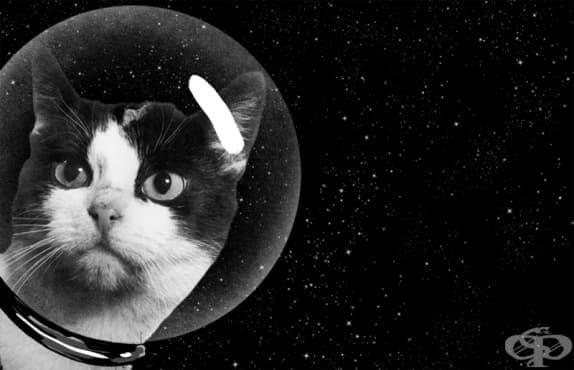 Фелисит – първата астрокотка, летяла в космоса - изображение