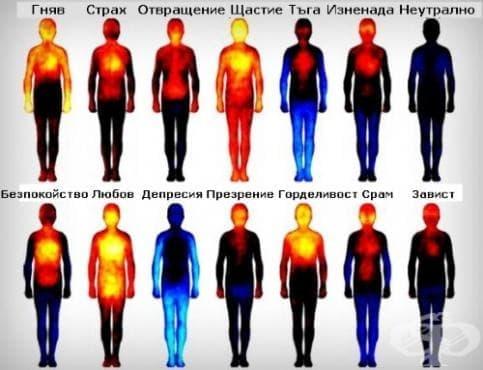 Вижте как изглежда атласът на човешкото тяло по време на различните емоции (инфографика) - изображение
