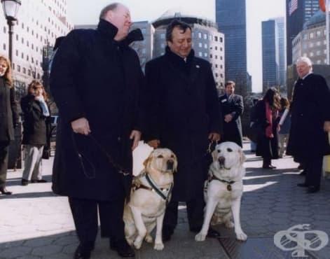 Кучетата- водачи Салти и Розел - приятел в нужда се познава  - изображение