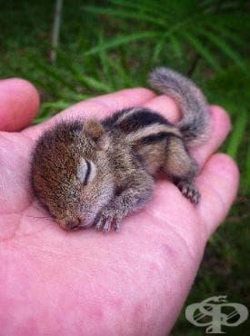 Запознайте се с Роб - бебето катерица, спасено от режисьор на BBC Wildlife - изображение