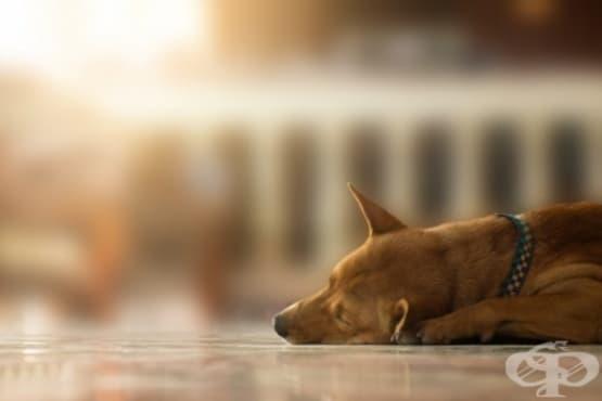 Как Холандия стана първата страна в света без бездомни кучета  - изображение