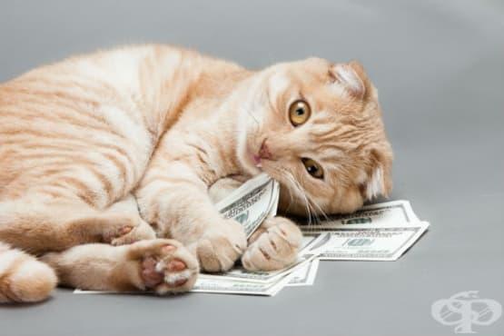 Милионерка завеща 300 хиляди долара на двете си котки - изображение
