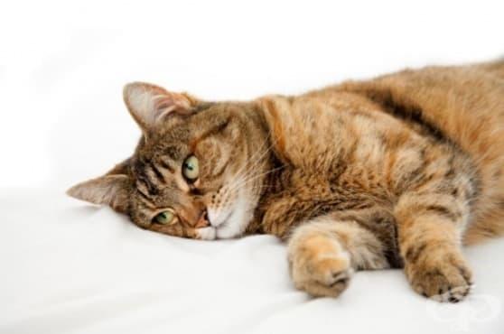 Как можете да разберете дали вашата котка е болна - изображение