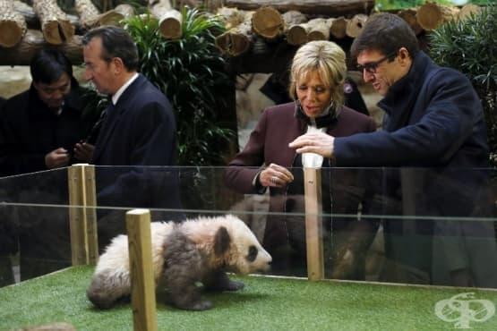 Първата дама на Франция стана кръстница на бебе панда - изображение