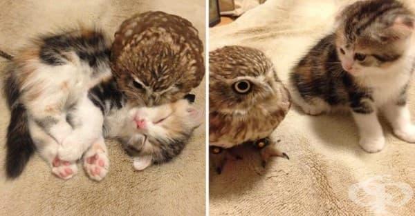 Коте и бухал – едно необикновено приятелство - изображение