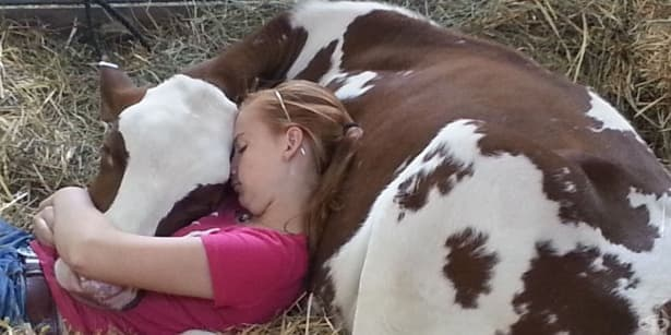 Да гушкаш крава – новата модна терапия - изображение