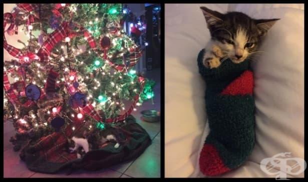 Котка ражда под елхата и това е най-добрият подарък  - изображение