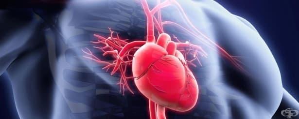 11 нови научни факта за човешкото тяло - изображение