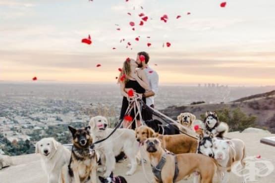 Епично предложение за брак, съпътствано от 16 кучета - изображение