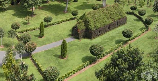 Църква, изградена от живи дървета – мечтата на един новозеландец - изображение