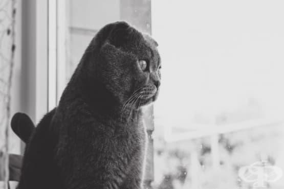 Да пускам ли котката си навън - изображение