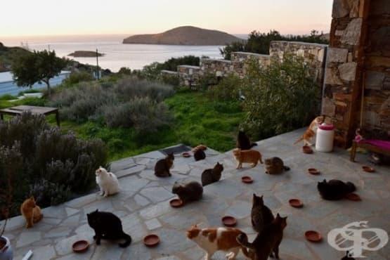 Работа мечта: Да се грижиш  за 55 котки на гръцки остров - изображение