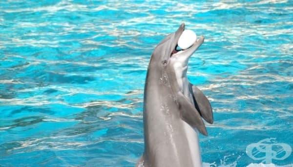 Делфините в Индия – личности, които не принадлежат към човешката раса - изображение