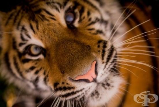 Ще се вдъхновите от тези 10 животински вида, спасени от изчезване - изображение