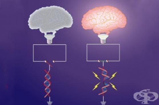 Мозъчните клетки пречупват собственото си ДНК, за да ни позволят да създаваме спомени - изображение