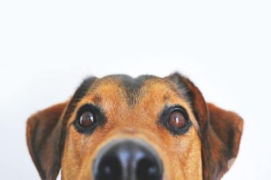 Колко интелигентни всъщност са кучетата - изображение