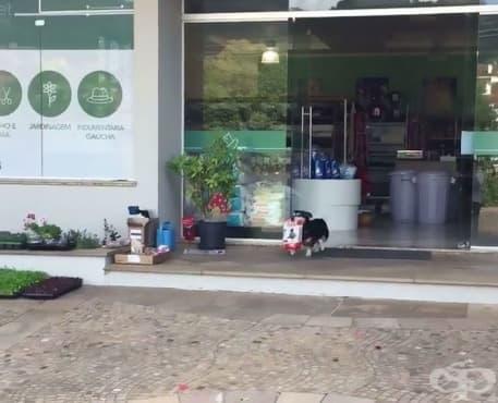 Всеки ден това куче  пазарува само - изображение