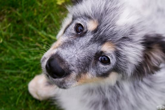 5 интересни факта за кучетата, които навярно не знаете - изображение