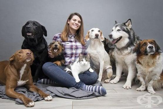 Коя е най-подходящата порода кучета за вашето здраве или темперамент - изображение