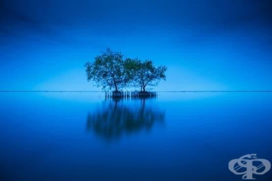 Дърветата имат чувства, сприятеляват се и се грижат за себе си, твърдят учените - изображение