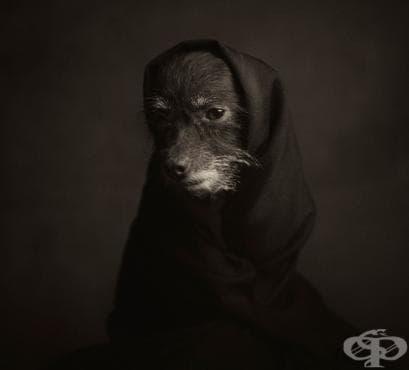 Вижте човешките емоции в животните във фотографиите на Винсент Лаграндж (галерия) - изображение