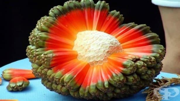20 от най-редките и екзотични плодове, за които дори не сте чували - част 1 - изображение