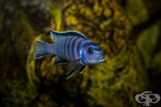 Паузите преди съобщаване на важна информация са характерни и за електрическите риби - изображение