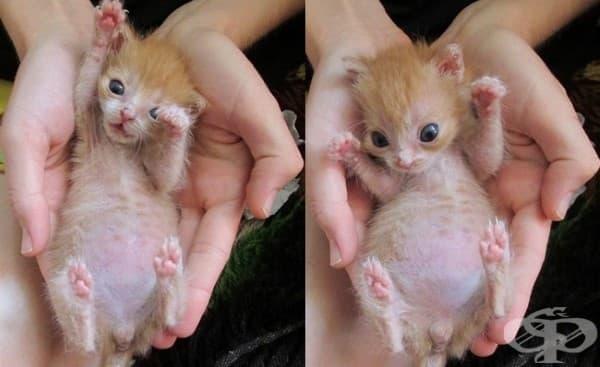 6 съвета при отглеждането на новородени котенца  - изображение