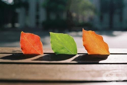 15 приказни пейзажа, разкриващи трансформацията на природата при смяната на лятото с есента - изображение