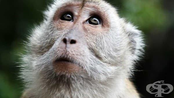 Петте най-често срещани погрешни схващания за еволюцията - изображение