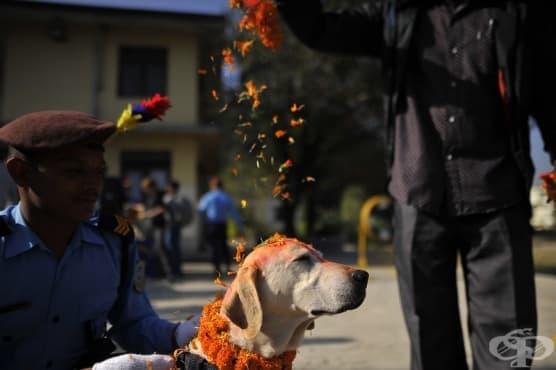 Фестивалът в Непал, на който хората благодарят на своите кучета - изображение