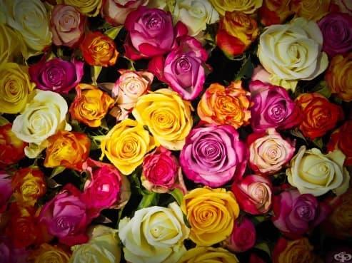 Наричайте децата си на цветя! Така закодирате послание за красота - изображение
