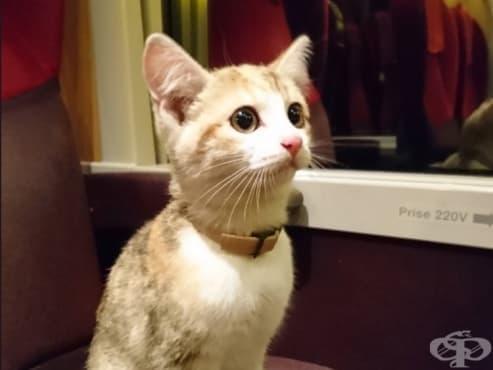 Френска котка се върна при стопанката си с влак - изображение