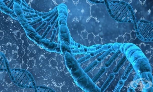 10 мита за гените – разбити - изображение