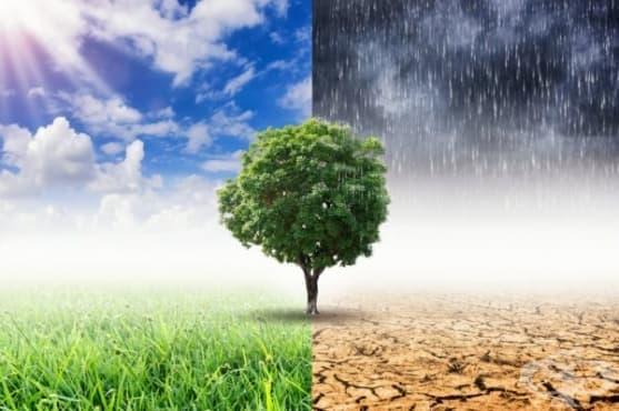 9 катастрофални последици, причинени от глобалното затопляне  - изображение