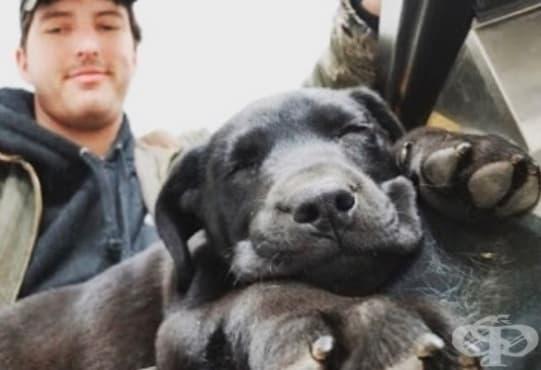Глухонеми приятели: Мъж осиновява куче и го учи на жестомимичен език - изображение