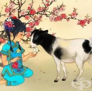 2015 година в китайския зодиак – Годината на Козата (Овцата). Предсказания и насоки. - изображение