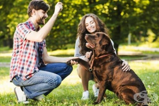 Говорите ли с кучето си? Значи сте изключително креативен и интелигентен човек - изображение