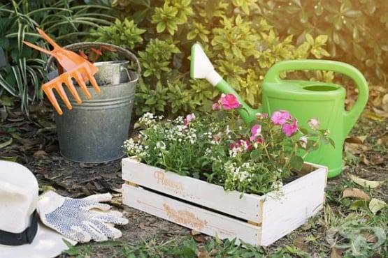 Съвети за градинарство, които ще ви спестят не само време, но и пари - изображение
