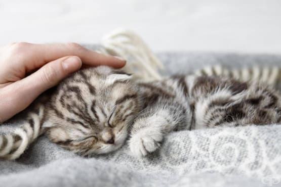 Ветеринарна клиника търси гушкач на котки с нежни ръце - изображение