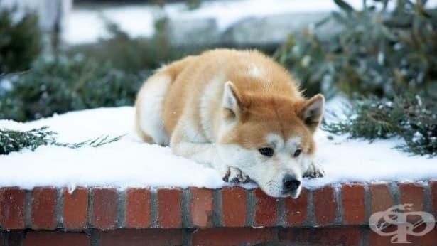 Защо понякога кучетата чакат години до гробовете на своите собственици? - изображение
