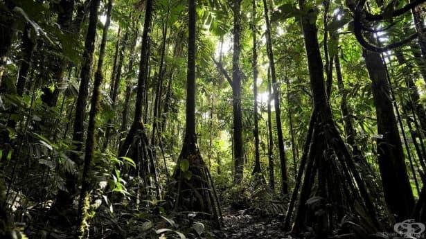 Ходещите дървета на Еквадор – мистерия сред необятна красота - изображение