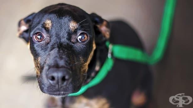 3 трогателни истории за кучета и техните спасители - изображение