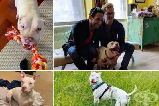 Изоставено куче не спира да се взира в стопаните, който го спасяват - изображение